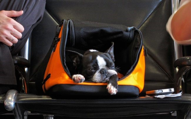 How to travel to Turkey with a dog
