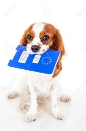 Passports for pets